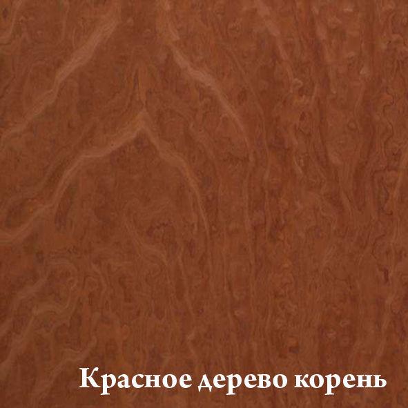 krasnoe__derevo__koren